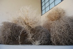 tumbleweeds gathered to use a memorial vehicle