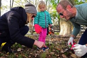 McGolrick Park Daffodil Planting 11/05/2016