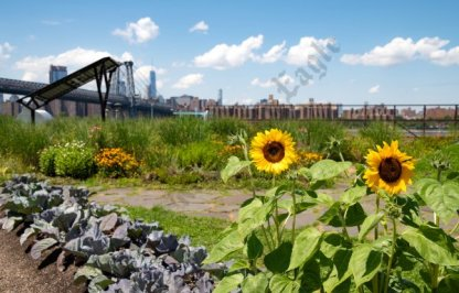 Green Roof Campaign 07/18/2018 - Brooklyn Archive