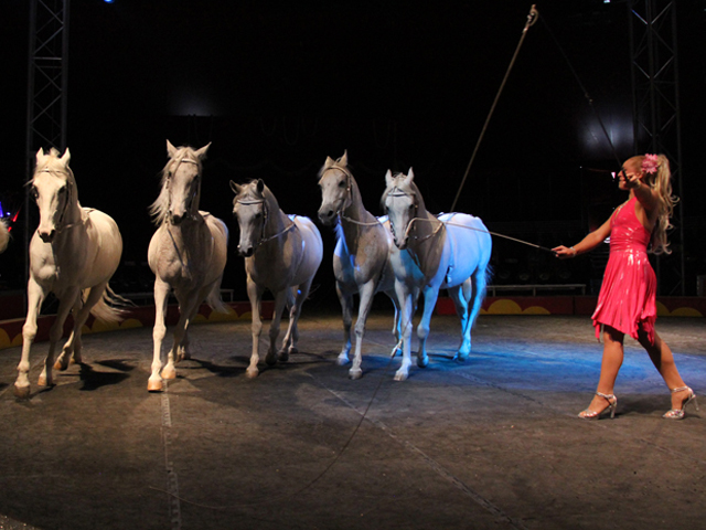 horses circus