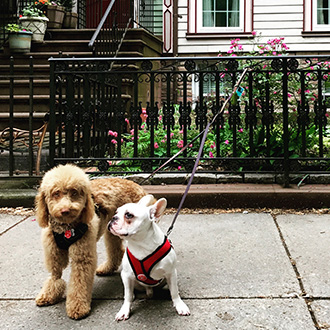 Get a Brooklyn Dog Walker