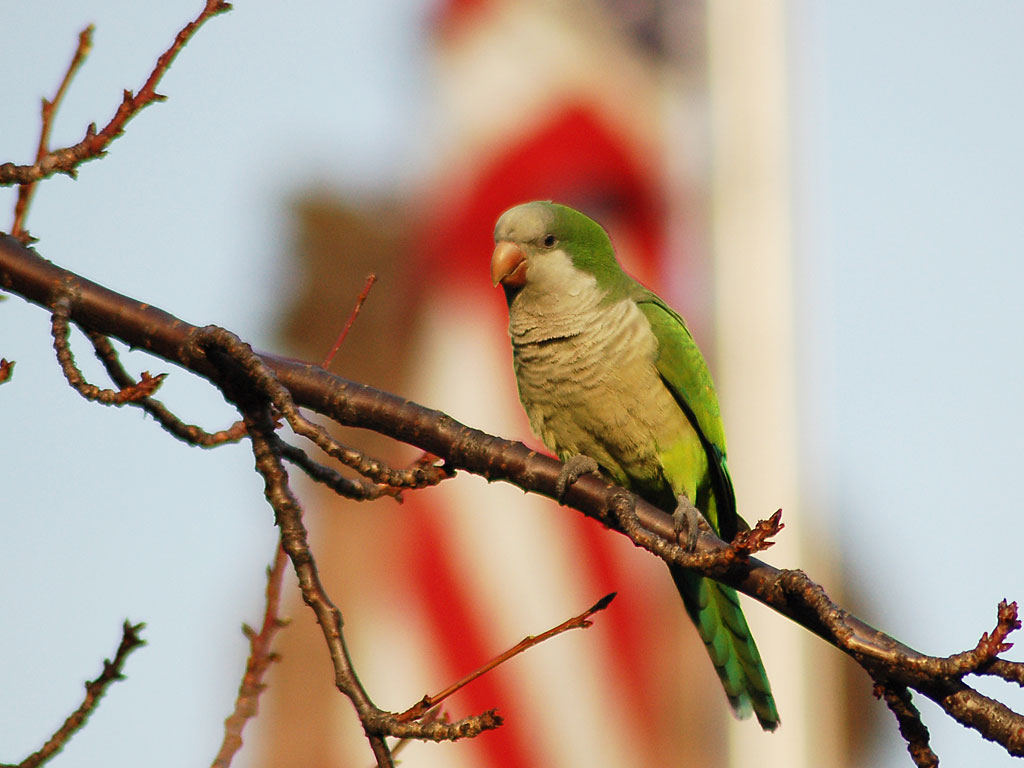 Photo Essay Wild Parrots Of Brooklyn Coursework Writing Service