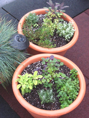 rose_and_herb_rooftop_garden