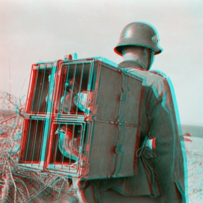 Carrier pigeons are presented in the supporting frame