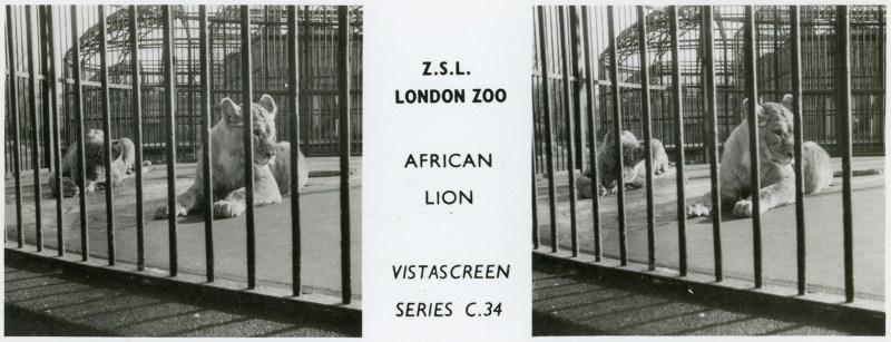 LondonZoo001