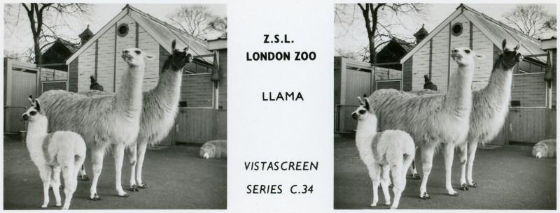 LondonZoo006
