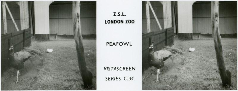 LondonZoo007