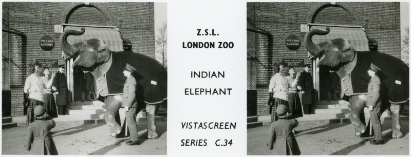 LondonZoo009