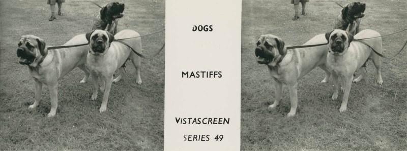 "Series 49 ""Dogs"" - Mastiffs"