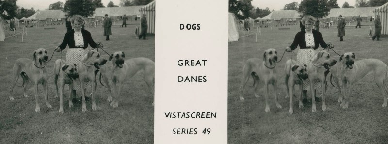 """Series 49 """"Dogs"""" - Great Danes"""