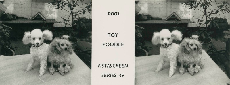 """Series 49 """"Dogs"""" - Toy Poodle"""