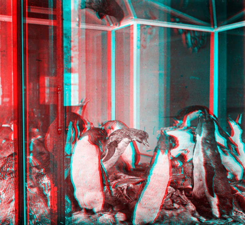 Anaglyph of Grande Galerie de l'Évolution Penguins.