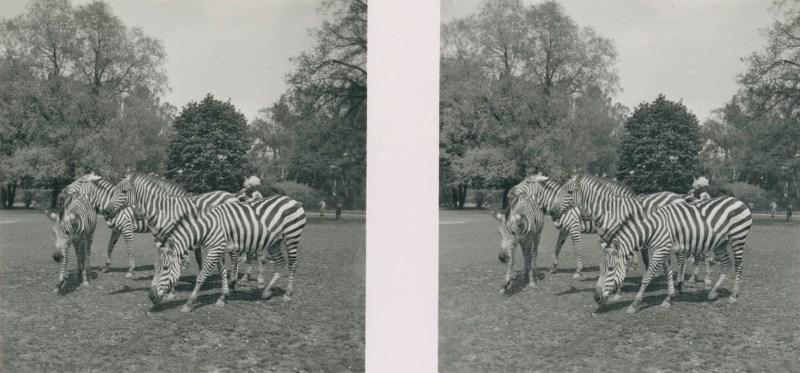 Tiere aus aller Welt, bild nr. 4
