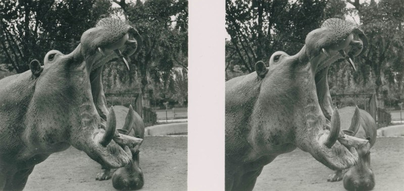 Tiere aus aller Welt, bild nr. 5