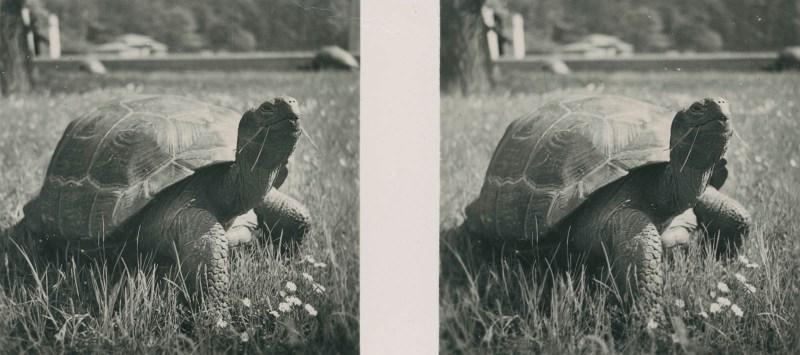 Tiere aus aller Welt, bild nr. 7