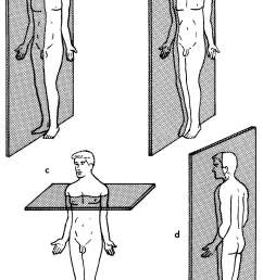 body plane diagram unlabeled [ 1381 x 2227 Pixel ]