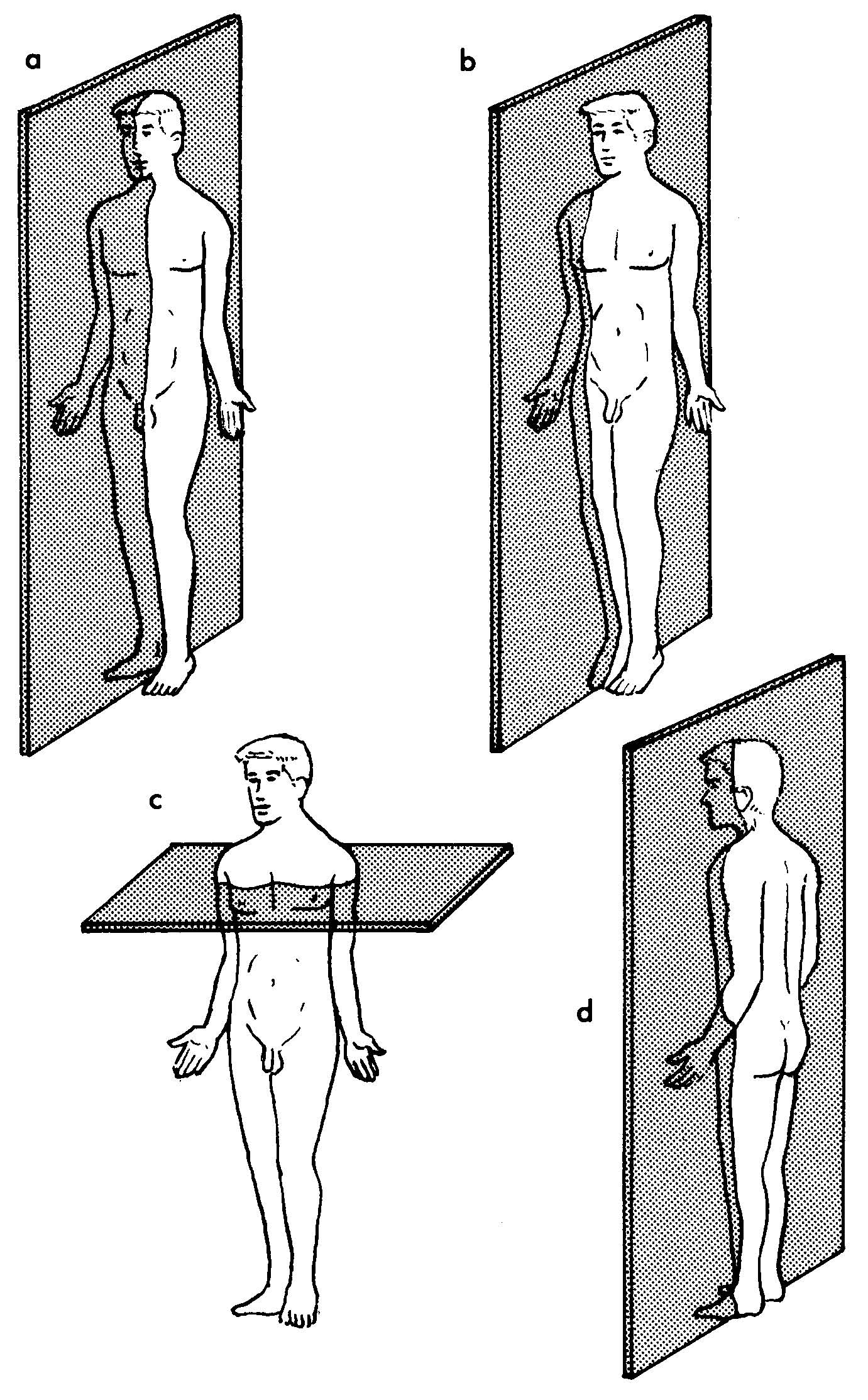 hight resolution of body plane diagram unlabeled