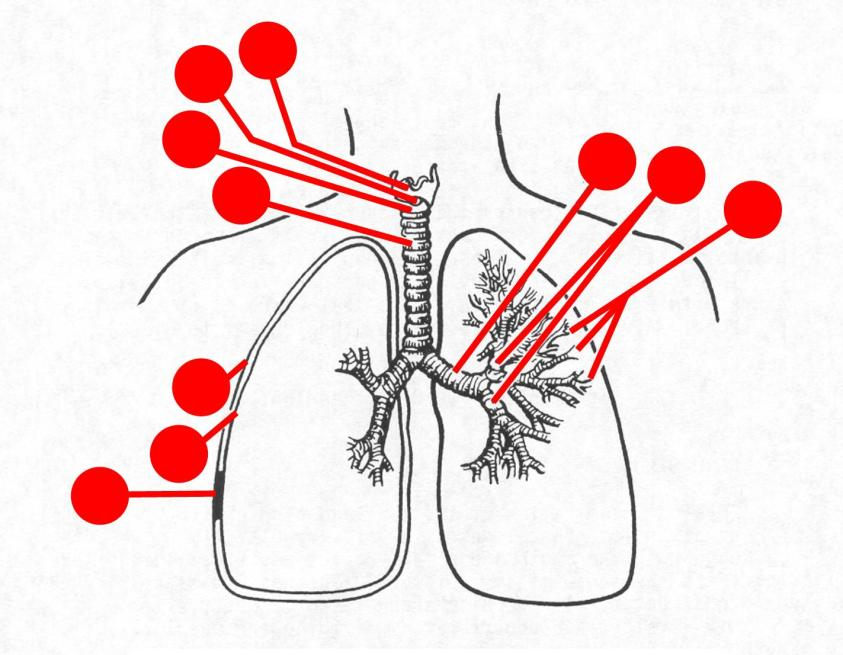 Images 07. Respiratory System and Breathing | Basic Human ...