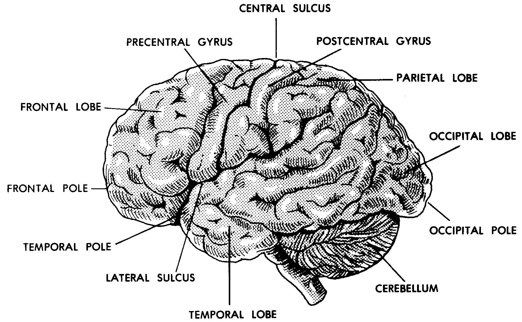 Images 11 Nervous System