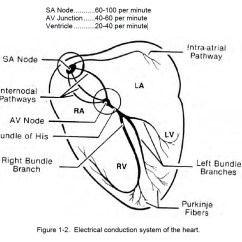 Cardiac Conduction System Diagram 1975 Bmw 2002 Wiring 1 03 General Rhythm Interpretation