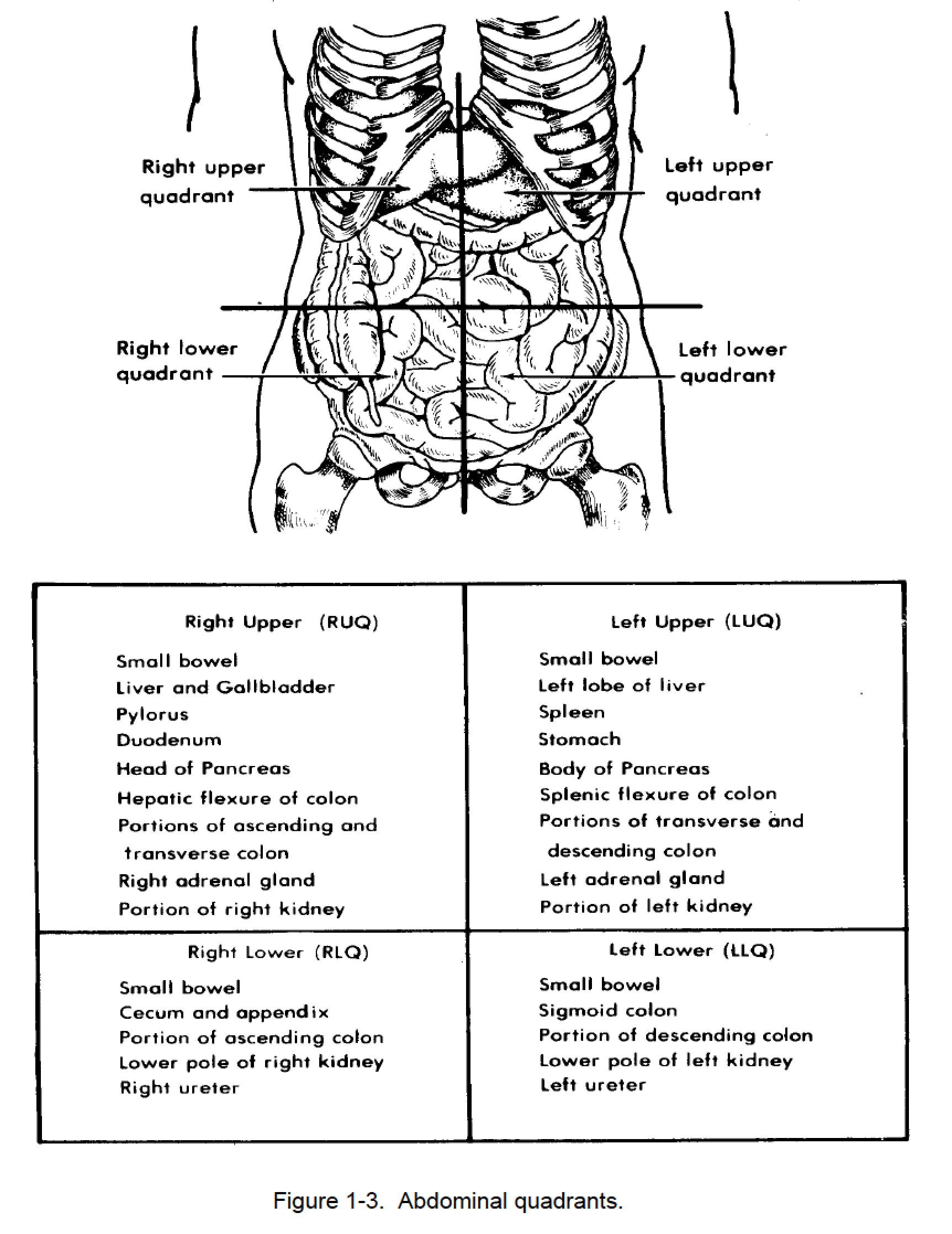 Anatomy Quadrants Worksheet