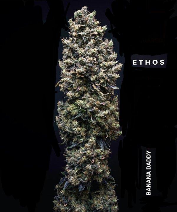 Ethos - Banana Daddy R1