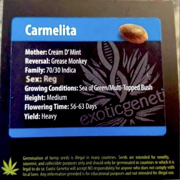 Exotic Genetix - Carmelita (Reg M/F)