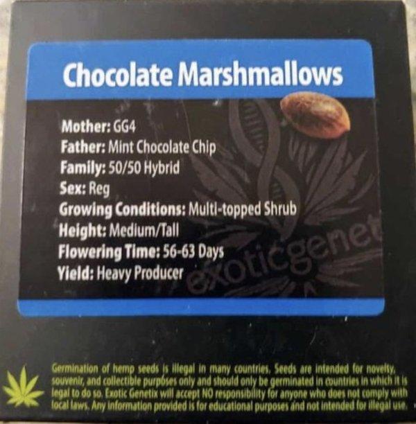 Exotic Genetix - Chocolate Marshmallows (Reg M/F)
