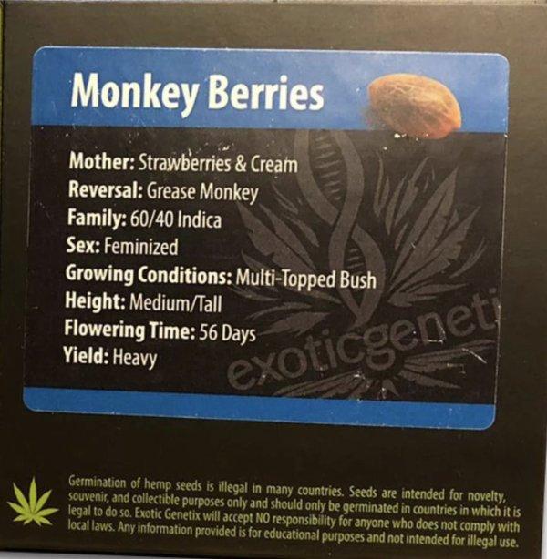 Exotic Genetix - Monkey Berries (Fem)