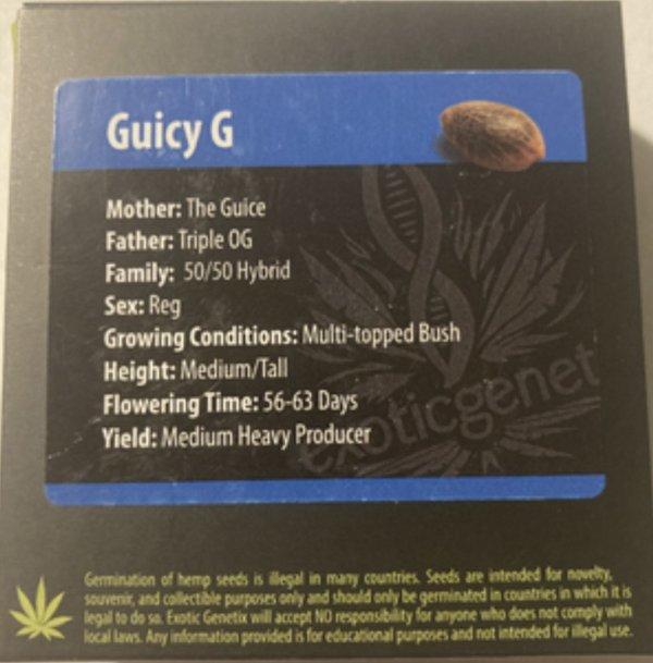 Exotic Genetix - Guicy G (Reg M/F)