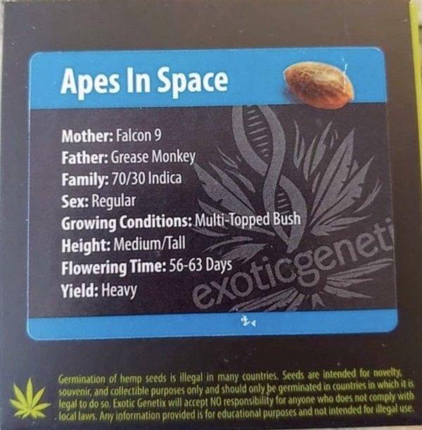 Exotic Genetix - Apes In Space (Reg M/F)