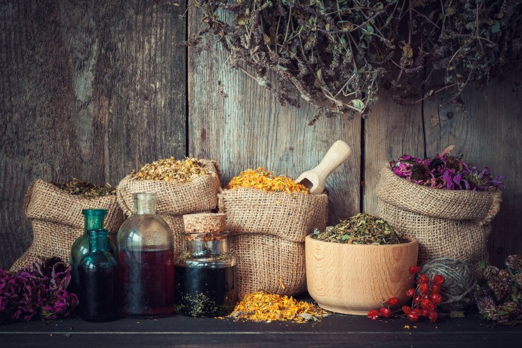 Infusão, macerado, tintura: métodos para aproveitar todos os benefícios das plantas