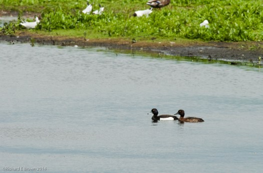 Whisby_Nature_Reserve-5