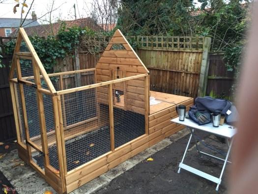 Garden Chickens Project-10