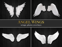 Angel Wings - photo overlays - Brown Leopard