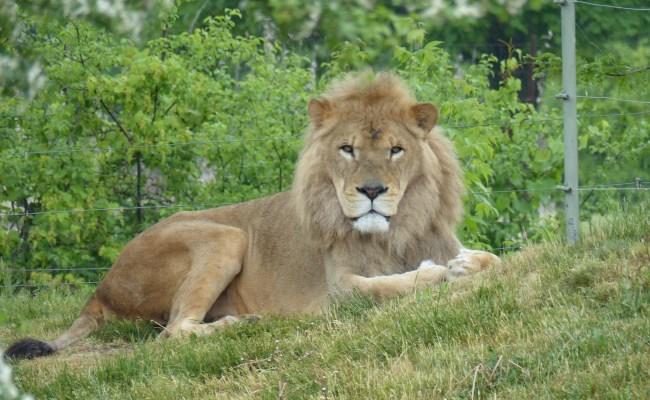 A Rainy Day At Toronto Zoo Brown Bear Travels