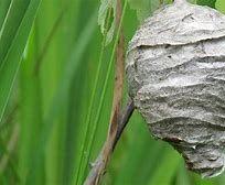hornet-nest-31