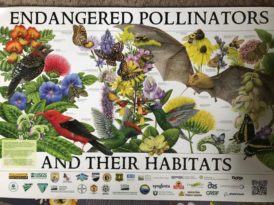 Endangered Pollinators