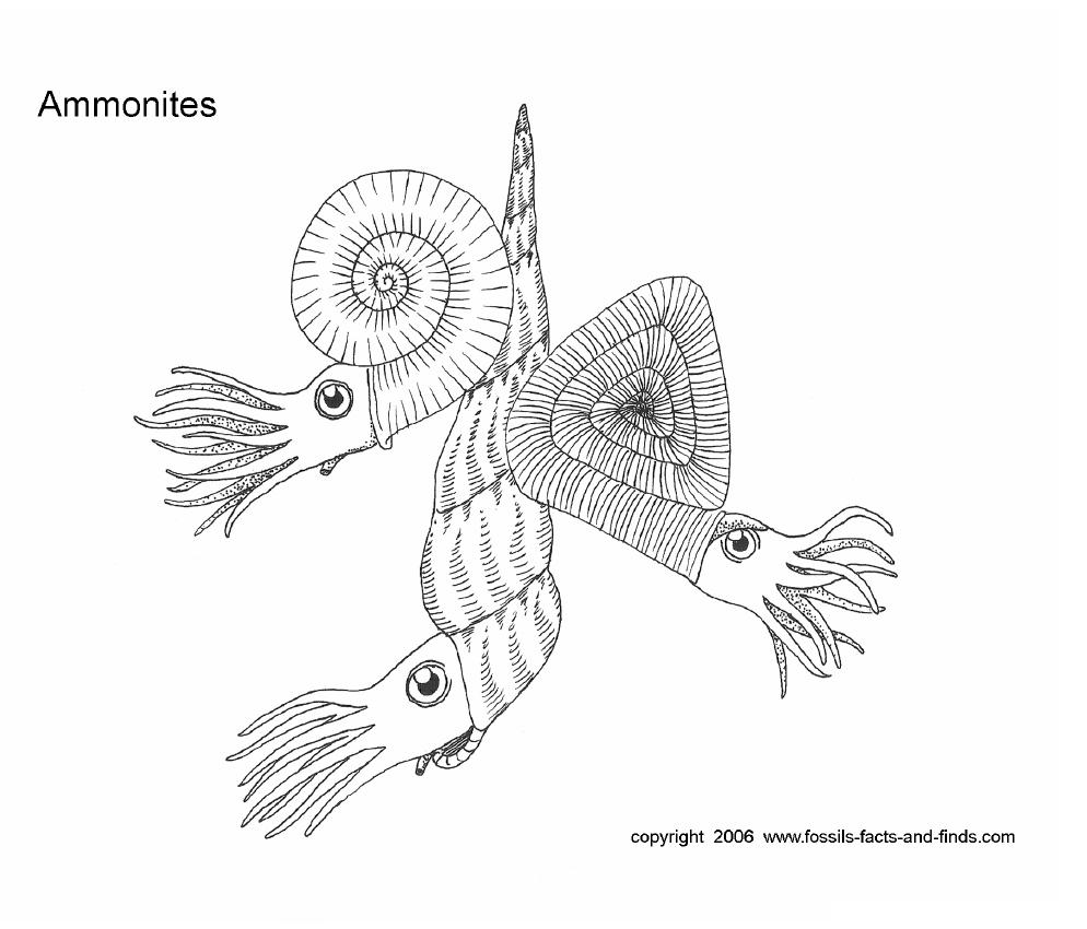 mineral Colouring Pages