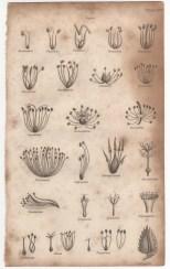 Botany, Portable Encyclopaedia, 1826