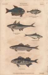 Pisces, Plate 1-1, London Encyclopaedia, Vol. 17, 1829