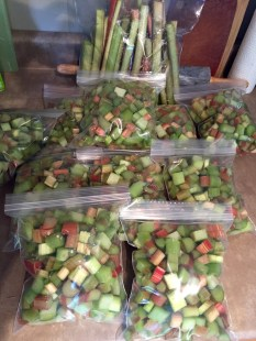 my bounty of rhubarb, washed, chopped and ready for the freezer