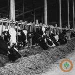 CME dairy markets mixed Friday