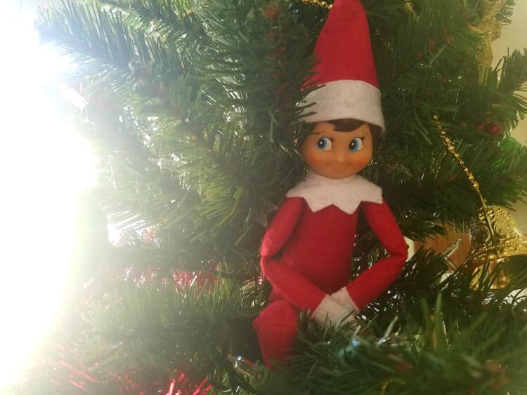 traditions noel : elf on the shield