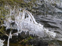 At Chasewater, the newly submerged trees are forming fascinating ice skeletons