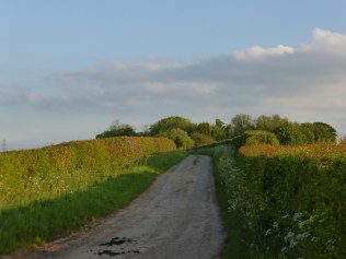 Thornyhurst Lane: only a few weeks ago this was impassible due to drifting snow