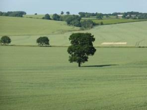 Lone Oak, near Orton on the Hill