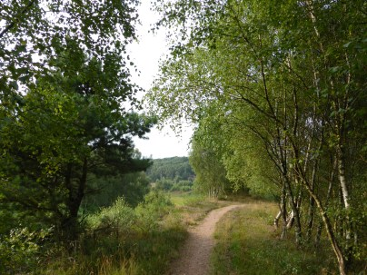 Bevins Birches, Cannock Chase