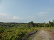 The old quarry, Cannock Chase