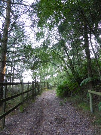 Near Bevins Birches, Cannock Chase